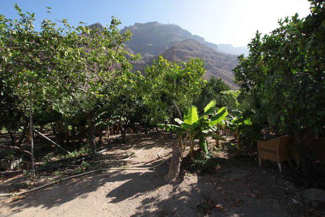 Finca For Sale In Arguinegun Gran Canaria